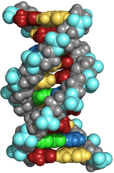 X-ray crystallography revealed the structure of DNA, image by Yikrazuul for Wikimedia